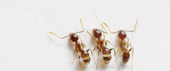 4 Effective Ways To Get Rid Of Ants In Your Home: